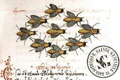 Medieval beekeeping manuscript.