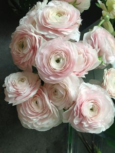 flower idea: blush ranunculus More