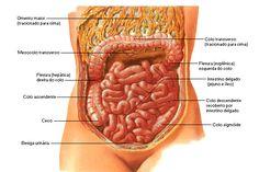 Aula de Anatomia | Sistema Digestório