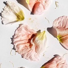 Love the pastel colors of these hibiscus petals 🌺 Flower Petals, Flower Art, Pink Petals, Flower Colour, Flower Texture, Logo Fleur, She Wolf, No Rain, All Nature
