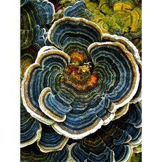 Fungus #amongus