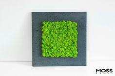 Naturalny mech MOSS decor w ramie z betonu architektonicznego - minimalistyczna dekoracja do nowoczesnych wnętrz. Rama dostępna w czterech odcieniach szarości.  Producent ramy: toBETON Format obrazu: 50 x 50 cm.