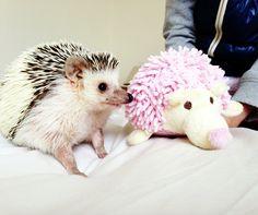 Minnie's new friend #hedgehog