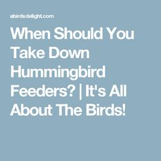 When Should You Take Down Hummingbird Feeders? | It's All About The Birds!