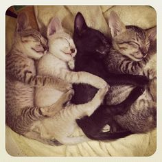 Snuggle Time Is in Full Effect! Whiskers On Kittens, Cats And Kittens, Kitty Cats, Cute Funny Animals, Cute Dogs, I Love Cats, Crazy Cats, Fancy Cats, Lovely Creatures