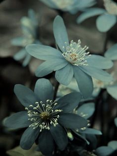 Pale Blue Flowers in the Garden. My Flower, Beautiful Flowers, Flower Colour, Simply Beautiful, Deco Floral, Color Inspiration, Story Inspiration, Mother Nature, Planting Flowers