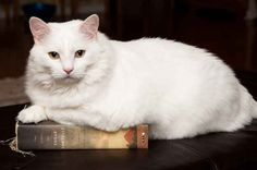 """He really should have called it The Story of Edgar Paw telle ."" 