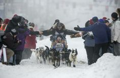 Iditarod dog sled race in downtown Anchorage, Alaska March 2, 2013