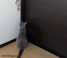 catsdogsblog: Cat Gifs and Dog Gifs http://ift.tt/1A7cxQD