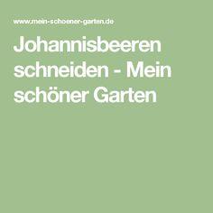 Johannisbeeren schneiden - Mein schöner Garten