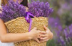 lavender flowers - Google Search