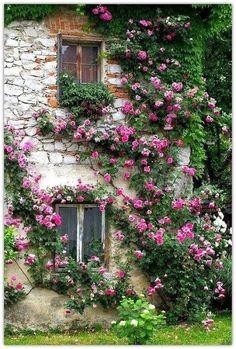 Blogger Pixz: Flowers