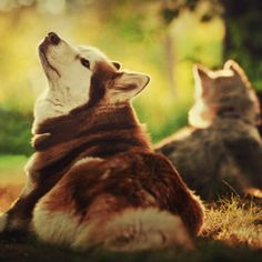 husky- we need one! And plenty of doggie treats :-)