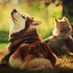 i really want a husky <3