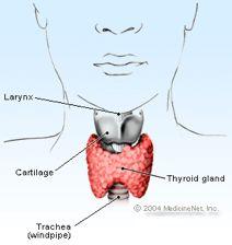 8 Natural Hypothyroidism Treatments That Work