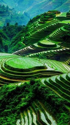 - you're not the only one - Banaue Rice Terraces - philippines Banaue Rice Terraces, Landscape Photography, Nature Photography, Les Philippines, Philippines Travel, Luang Prabang, Beautiful Places To Travel, Nature Wallpaper, Nature Pictures