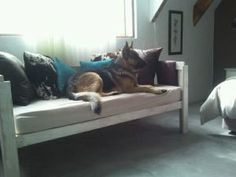 Pet-friendly Guesthouse - bring your horses, dogs and cats on holiday