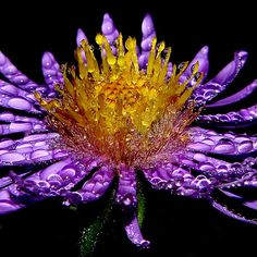 25 Beautiful Examples Of Macro Flower Photography | Mow Design | Graphic Design Blog