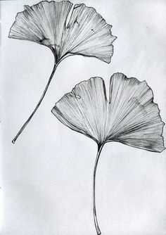 Ginkgo Leaf Drawing Ginkgo tree tattoo