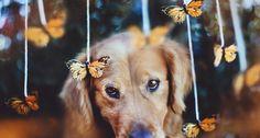 Os 10 cachorros mais fotogênicos de todos os tempos