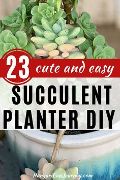 23 Cutest planter ideas for succulents - Learn to create beautiful things