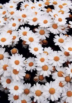 bed of daisies.