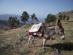 """Cortesía de """"El arriero"""" Sierra Nevada, Cortijo Fuente de los Berros - Güéjar Sierra, Granada (España)."""