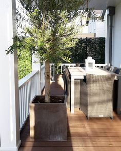 My little Olive tree  #rivieramaisonlove #rivieramaison #porch #veranda #garden #instagarden #porchlife #instaporch #instaveranda #olivetree #interior #interiorandhome #interiordesign #shabbyyhomes #hem_inspiration #inspohome #interior444 #dewemelaer #classyinteriors #interior4all #interior4you  #interior123#interior9508 #interior4homes #interiordelux #interiors #passion4interior #interior125 by miralda_sharp_