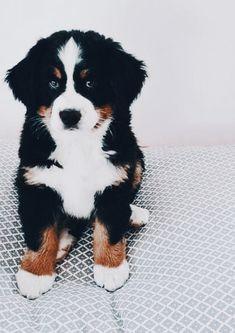 Mister Woof Loves... #dogs