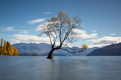 Lone Tree Photo by Jeff Bell — National Geographic Your Shot