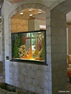 Aquarium in the wall