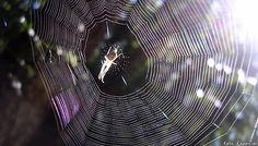 Revelan imagenes de La Telaraña más grande del mundo. San Miguel de Allende http://www.portalsma.mx/sma/index.php/noticias/2296-la-telarana-mas-grande-del-mundo #SanMigueldeAllende #SMA #Noticias #Arañas #Grandes