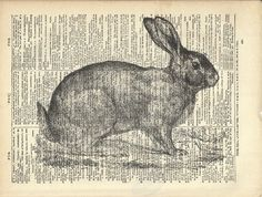 Bunny Rabbit Art Print On Vintage Dictionary by TexasGirlDesigns, $10.00