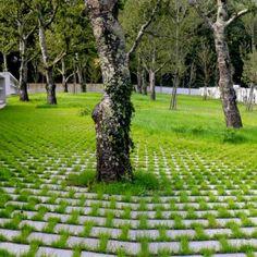 Bosque, EMF landscape architecture cemetery