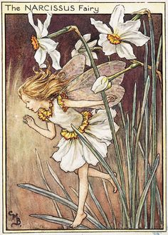 Cicely Mary Barker The Narcissus Fairy 1944  内田クンの描く水仙のイメージを彷彿する。