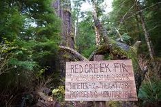 Image result for RED CREEK FIR TRAIL Letter Board, Trail, Lettering, Books, Red, Image, Libros, Book, Drawing Letters
