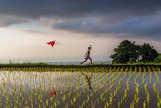 Photo d'art Playing in the rice fields - Achat / Vente Michael Portillo, Cultures Du Monde, Sainte Catherine, Photo D Art, Photos Du, Bordeaux, Fields, Island, Explore