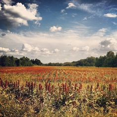 Signs of fall: Field of dreams, by misvincent