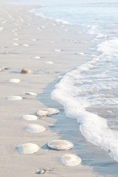 Sand-dollar beach