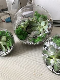 Hand made terrariums for happy people and happy houses! Pots, Happy House, Happy People, Terrariums, Flower Arrangements, Houses, House Design, Green, Flowers
