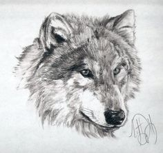 charcoal images sketches   50-Minute Wolf Charcoal Sketch by ~Skimbleshanks2 on deviantART