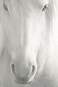 Invoke horse if you haven't yet gained complete independence and need to stand on your own feet now that you are an adult. Horse medicine helps us to find our own place in the world.