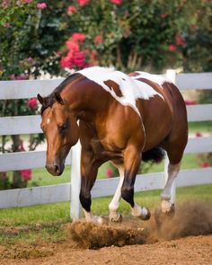 I am free lunging chip for my husband. We share a room. I am so glad the girls get to see him after a year on a business trip-Mary