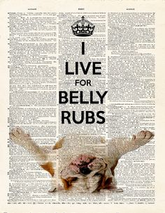 KEEP CALM English Bulldog - I LiVe FoR BeLLY RuBS - Dictionary Print -