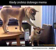#pies #piesel #touczucie #mem