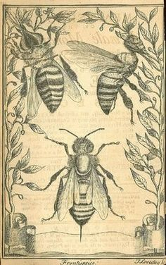 lovely layered vintage-style drawings of bees