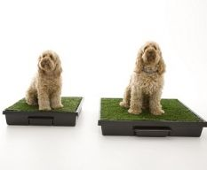 The Pet Loo... Your Backyard in a Box!!!