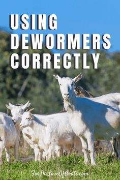 In this episode I'm talking to Susan Schoenian, a sheep and goat specialist with the University of Maryland's Western Maryland Research Breeding Goats, Raising Goats, University Of Maryland, Goat Farming, Baby Goats, Education Center, Small Farm, Livestock, Sheep