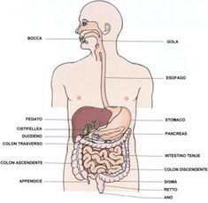 health effects of yoga For Your Health, Health And Wellness, Health Yoga, Biology Art, Reflexology, Greys Anatomy, Yoga Fitness, Medical, Education