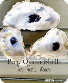 Just hours before, these were our dinner! Check out the easy steps to cleaning oyster shells to ready them for home decor and craft projects. I've made countless topiaries, lanterns, mirrors, frames, etc using shells but you MUST do this first!